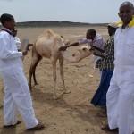 Fundacja-dla-Somalii-The-Mobile-Vet-Clinic