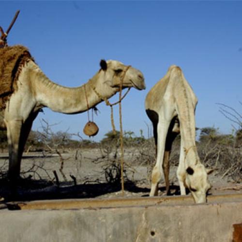 SOMALIA-LUDY-PASTERSKIE-KENIA